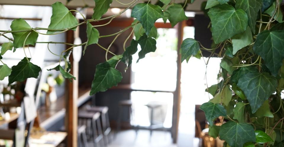 maruyoshi-coffee.com